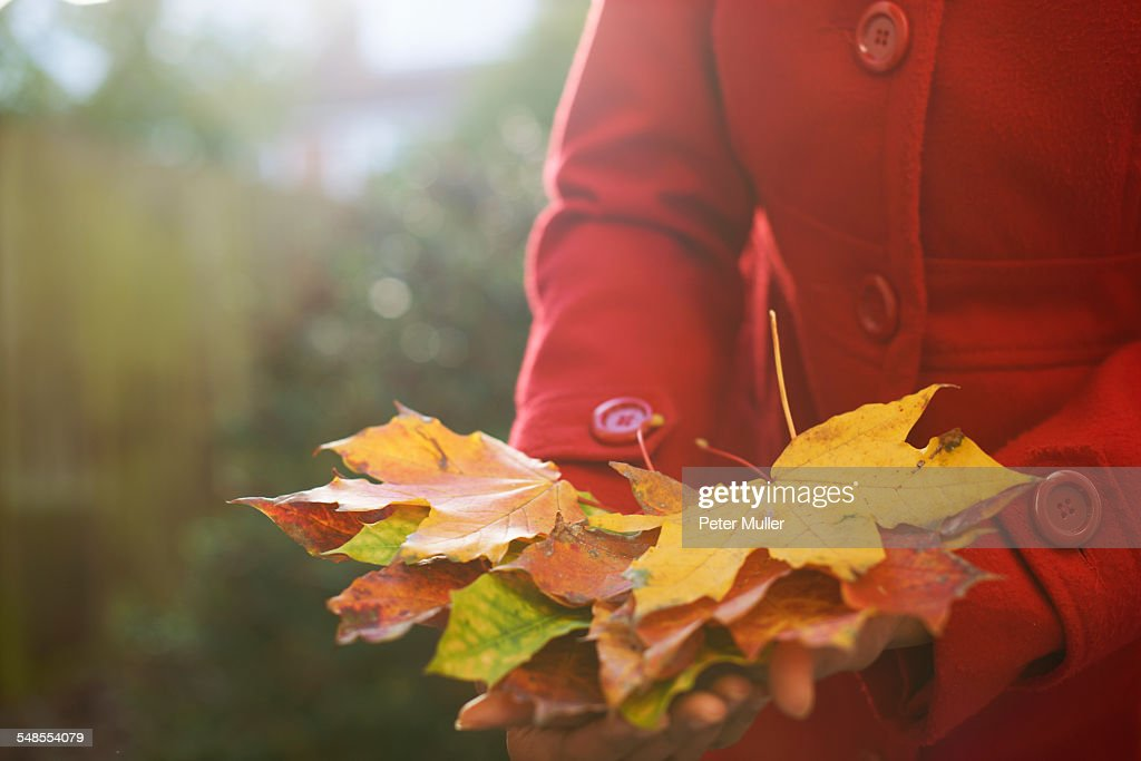 Womans hands holding pile of autumn leaves in park