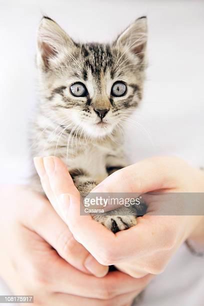 Woman's Hands Holding Tiny Kitten