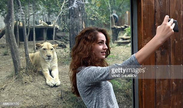 A womans takes a selfie in front of the lions openair cage at the Tbilisi zoo on September 13 2015 The zoo has reopened today after been destroyed by...