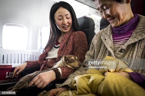Women and their dogs are seen in a plane in Chiba Japan on January 27 2017 Japan Airlines 'wan wan jet tour' allows owners and their dogs to travel...
