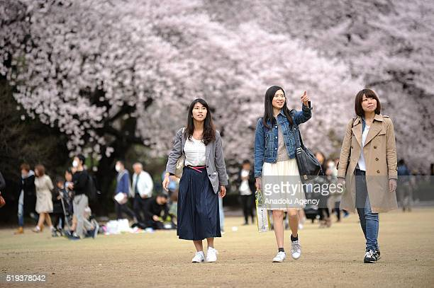 Women are seen walking the last beautiful day of Hanami a traditional picnic between family friends or colleague to enjoy the cherry blossom and the...