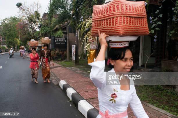 Women bearing offerings to the Hindu gods Ubud Bali Indonesia Many women turn to the Holy Book Monkey Forest to pray and leave offerings for the...