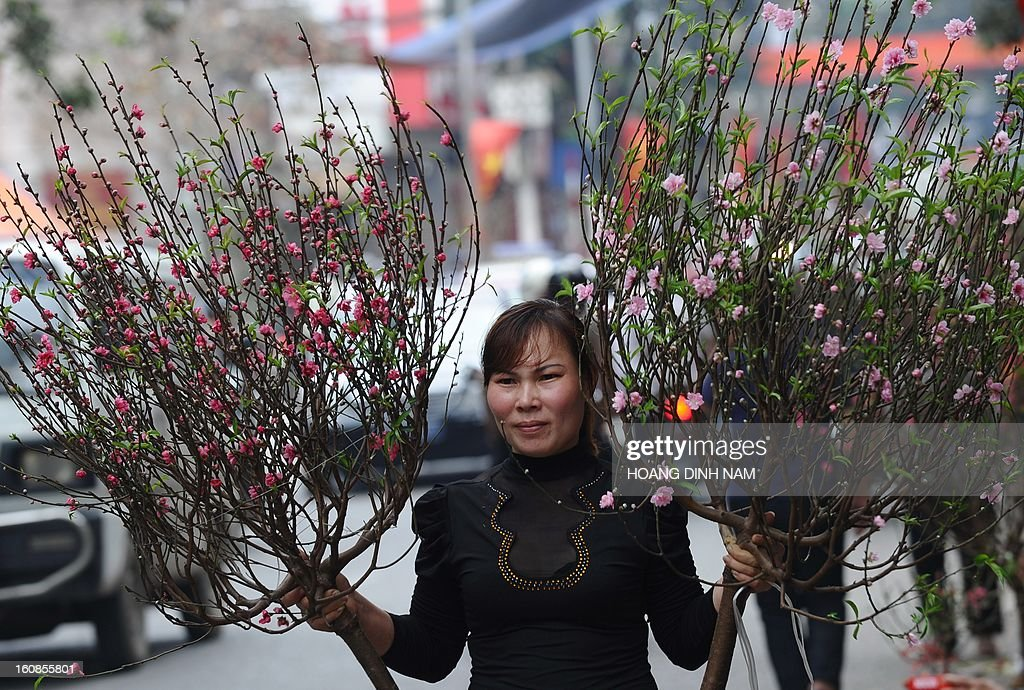 A women carries home peach blossoms as Vietnamese do last-minute shopping ahead of the start of the Lunar New Year, known in Vietnam as 'Tet' in downtown Hanoi on February 7, 2013. Vietnamese will have a nine-day long Tet holiday this year, the longest ever decided by the Vietnamese government. AFP PHOTO / HOANG DINH Nam