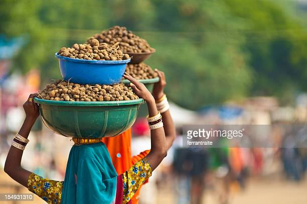 Women carrying dung on their heads, Pushkar, India