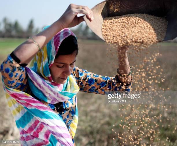 Women cleaning wheat