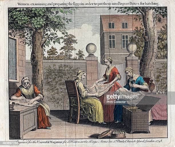 Women examining silk moth eggs and putting them in boxes for hatching into caterpillars 1748 From The Universal Magazine