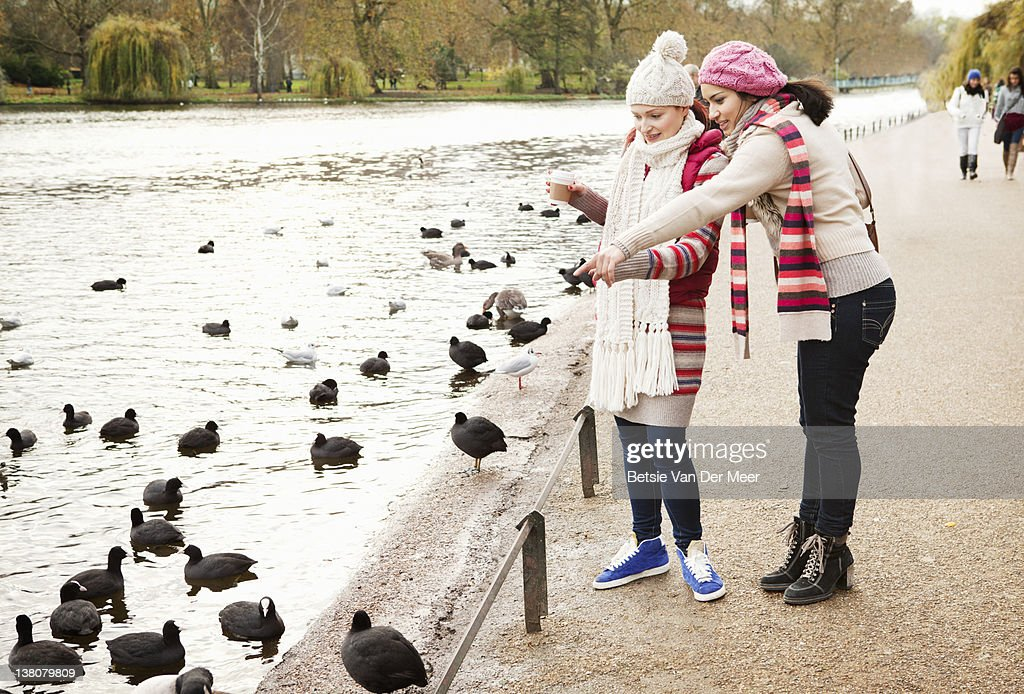 Women feeding ducks and coots. : Stock Photo