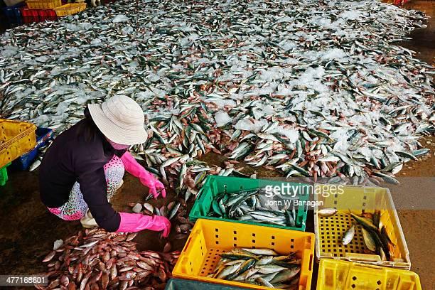 Women fish workers, Phan Thiet, Vietnam