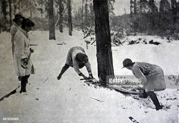Women Foresters at work Members of the Women's Forestry Corps engaged in treefelling In all parts of the country where timber was obtainable camps of...