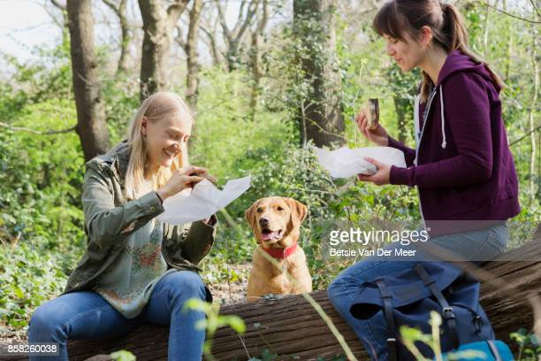 Women having a picnic, dog is begging for food.