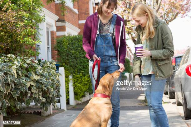 Women meet and talk about Labrador dog while the dog looks up at women.