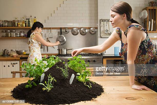 Women planting herbs in heap of dirt on kitchen table