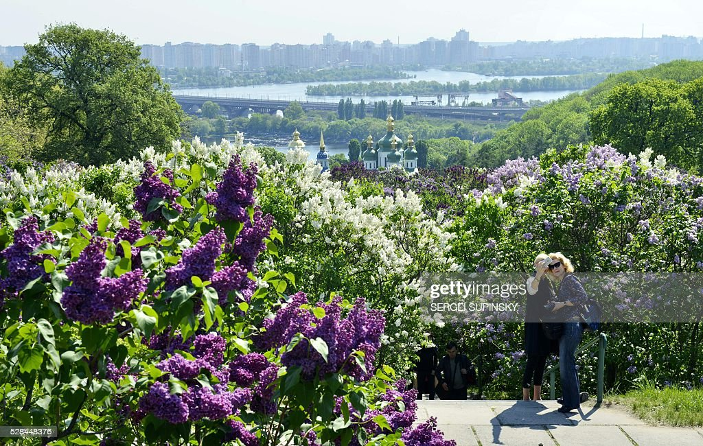 Women pose for a photograph among blossoming lilac in the Botanical Garden in Kiev on May 5, 2016. / AFP / Sergei SUPINSKY