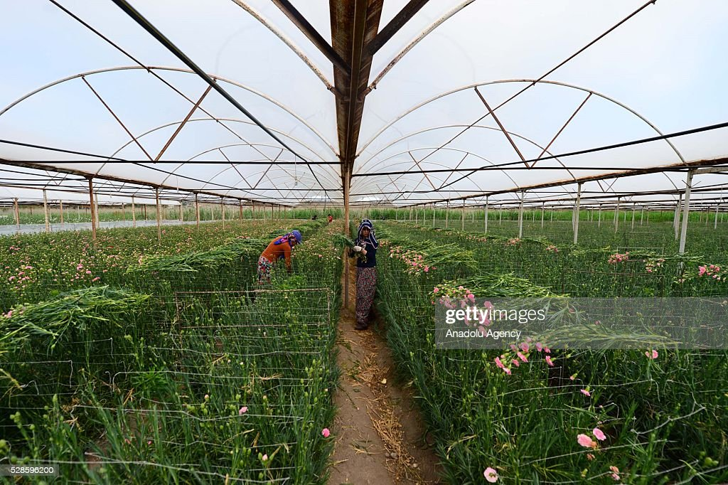 Women prepare the flowers for Mother's Day at a greenhouse in Antalya, Turkey on May 6, 2016.
