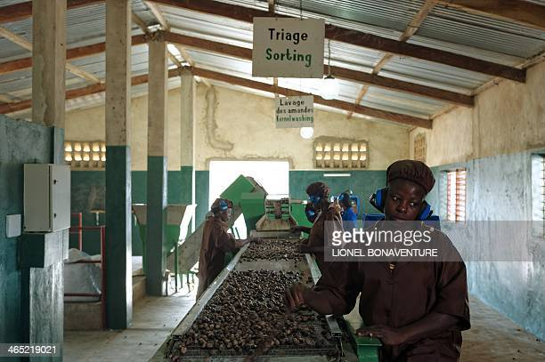 Women sort shea nuts on a shea butter production line for the French cosmetics company L'Occitane in Leo southcentral Burkina Faso on January 24 2014...