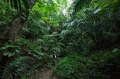 Women standing in dense tropical jungle, Iriomote