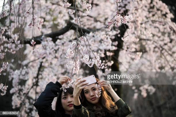 TOPSHOT Women take selfies with cherry blossoms in a park in Tokyo on March 30 2017 / AFP PHOTO / Behrouz MEHRI