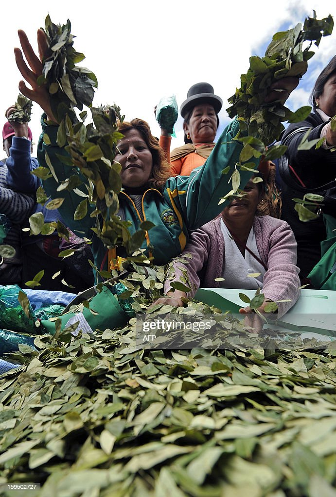 Women throw coca leaves into the air during a celebration for the reincorporation of Bolivia to the UN Convention Against Illicit Traffic in Narcotic Drugs in La Paz on January 14, 2013. 'The coca leaf is not any more seen as cocaine (..), it is a victory of our identity' said Bolivian President Evo Morales. AFP PHOTO/Jorge Bernal