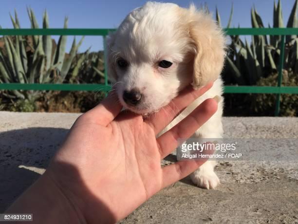 Women touching canine dog