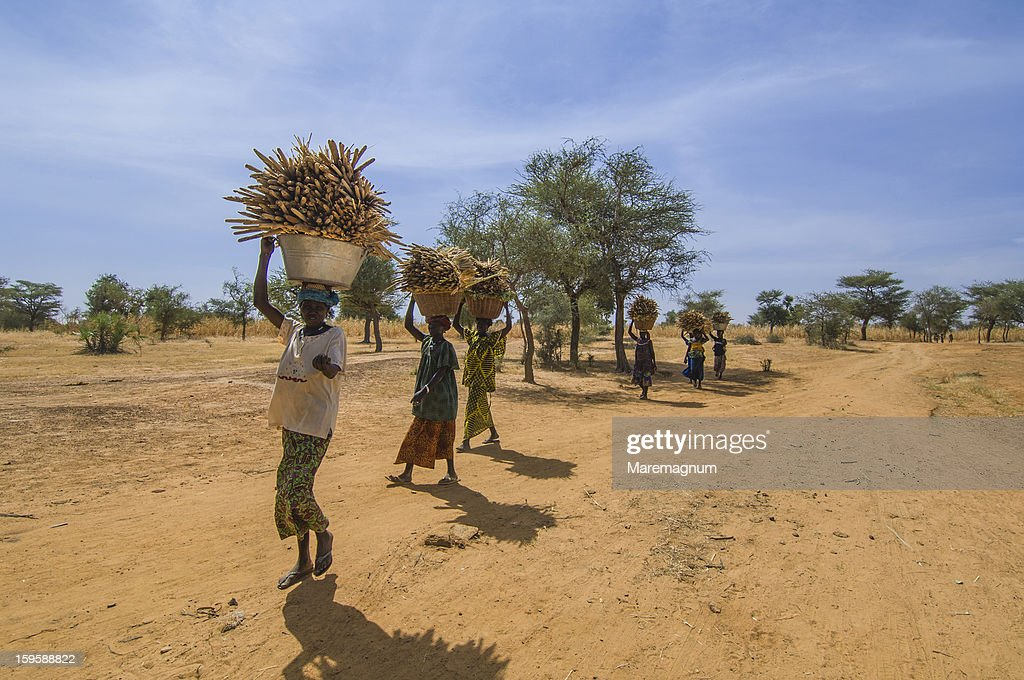 Women transporting wood on the road to Douentza : Stock Photo