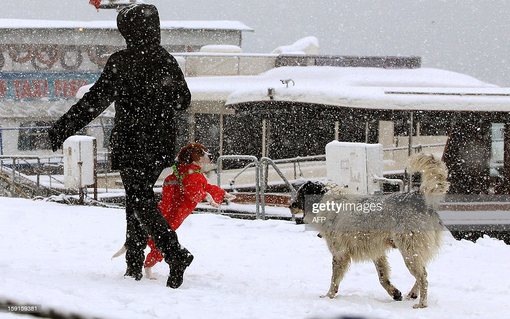 A women walks with her dogs on the Anatolian side of Istanbul on January 9, 2013. Heavy snowfall blanketed Turkey's commercial hub Istanbul, a city of 15 millions, paralysing daily life, disrupting air traffic and land transport.