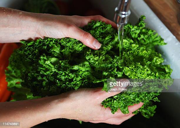 A women washes a lettuce on May 26 2011 in Hamburg Germany German health authorities have announced they suspect cucumbers tomatoes and salad grown...