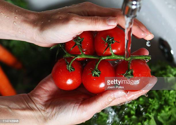 A women washes tomatoes on May 26 2011 in Hamburg Germany German health authorities have announced they suspect cucumbers tomatoes and salad grown in...