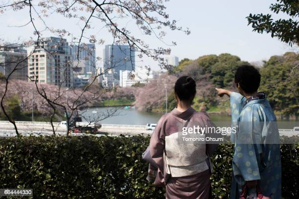 Women wearing kimonos look at cherry trees in bloom at the Chidorigafuchi moat on April 4 2017 in Tokyo Japan Japan's cherry blossom season is...
