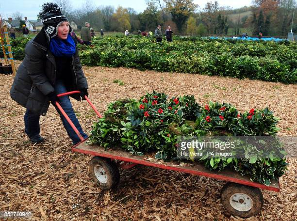 A women wheels away her goods after buying wreaths at the auction sale of holly mistletoe wreaths and Christmas trees at Bromyard Road Business Park...