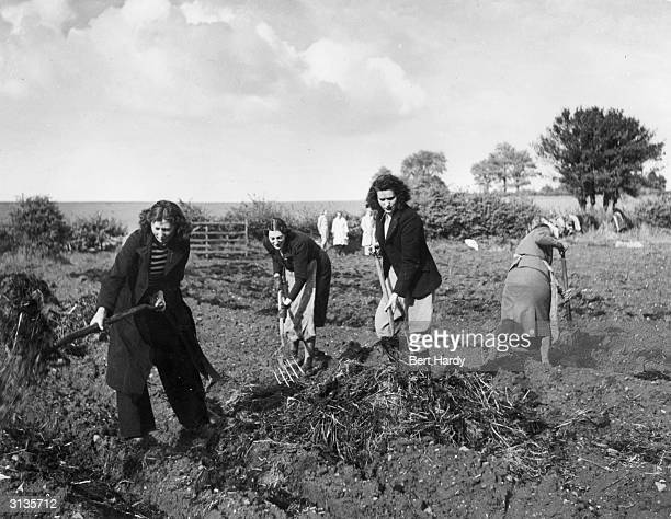 Women with pitchforks clear the straw from a field in Wolverhampton West Midlands during World War II Original Publication Picture Post 786...
