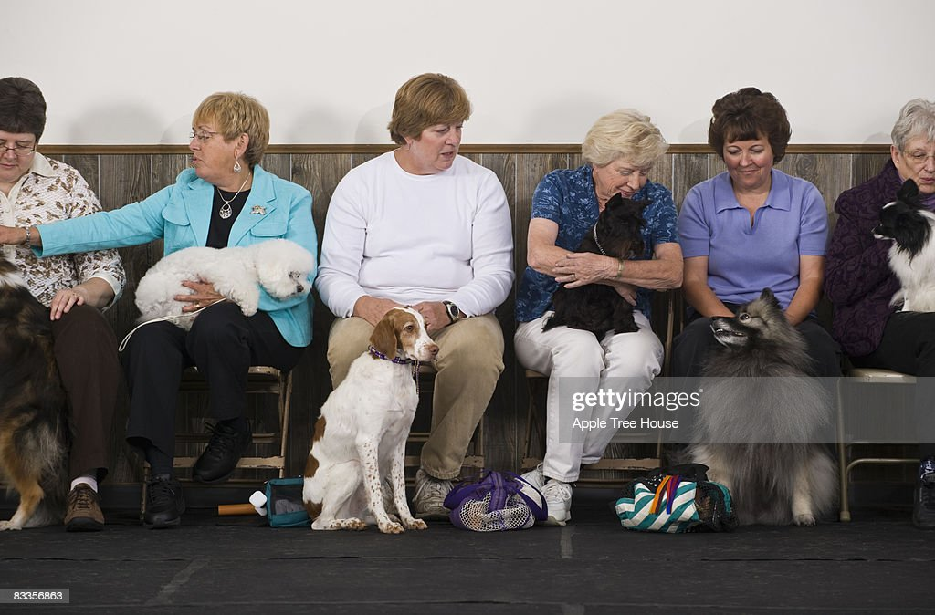 Women with various purebred dogs : Stock Photo