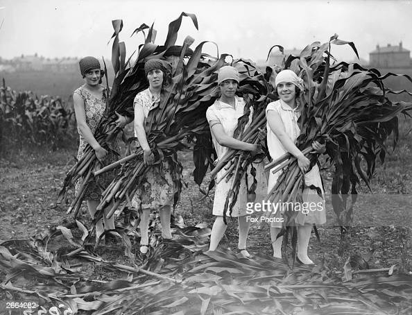 Women workers with armfuls of maize which they have been helping to harvest in Hoddesdon Hertfordshire