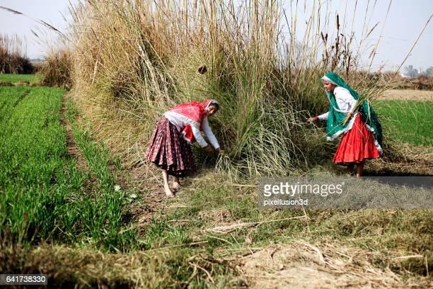 Frauen arbeiten im Feld