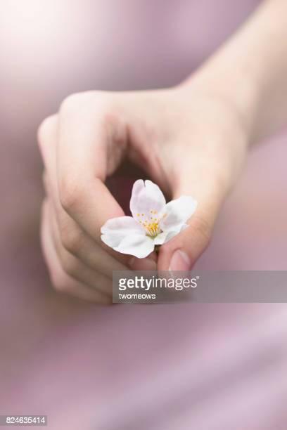 Women's hand holding a cherry blossom flower.