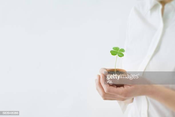 Women's hand holding a seedling