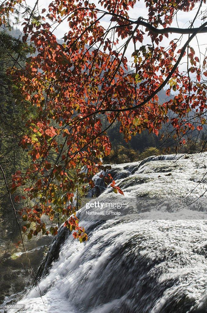 Maravilhosa outono no Parque nacional de Huanglong : Foto de stock