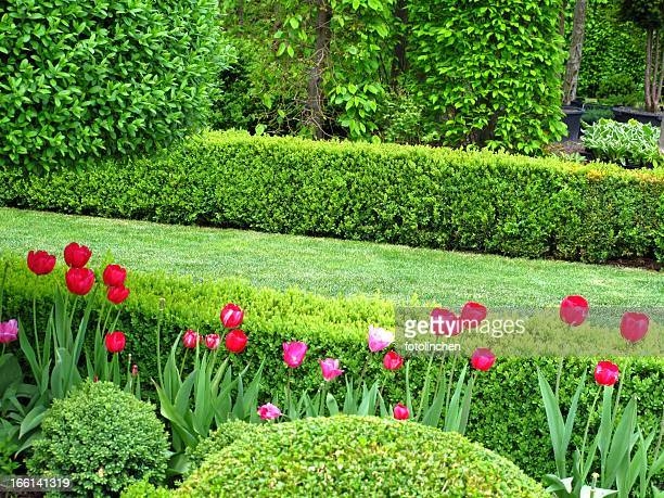 Wonderful garden in springtime