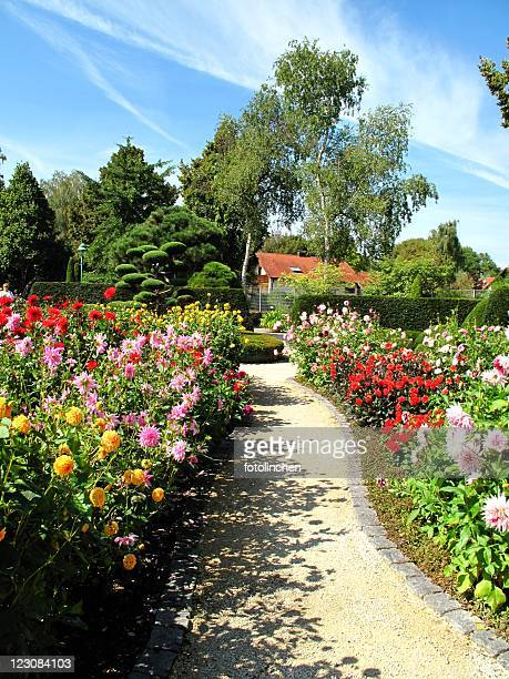 Wonderful garden with dahlias