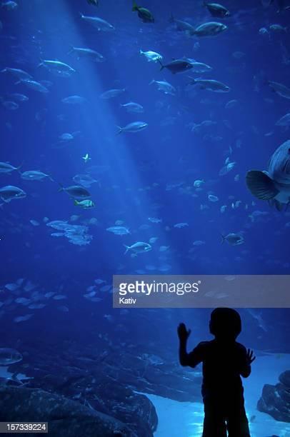 Beeindruckenden Sea Life