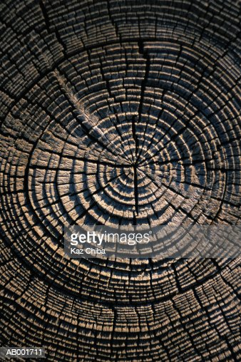 Wood Abstract : Stock Photo