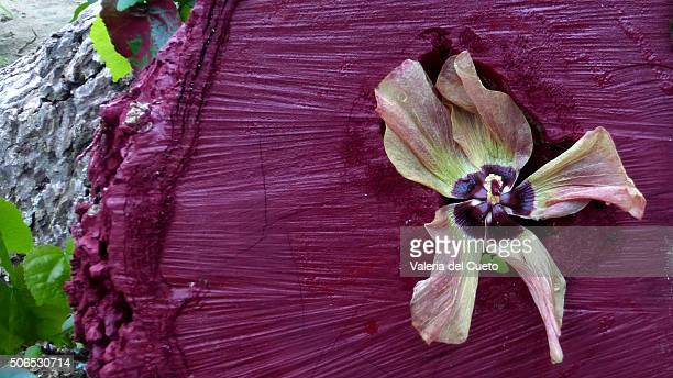 wood and flower