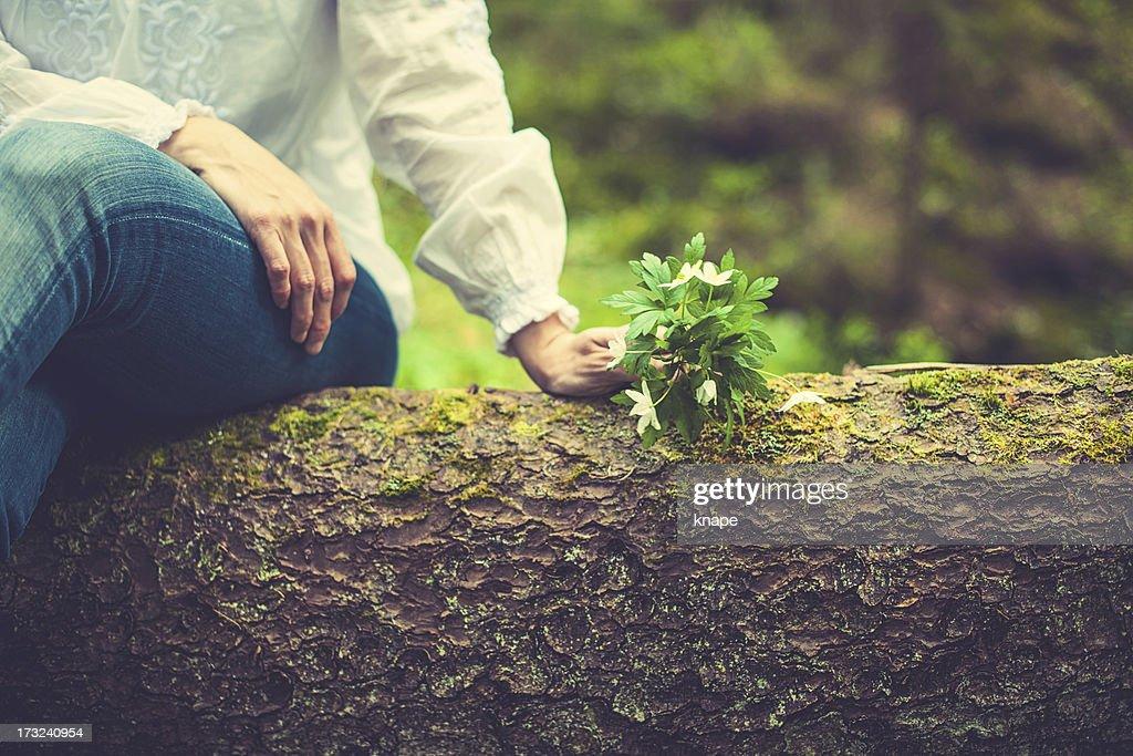 Anémone des bois : Photo