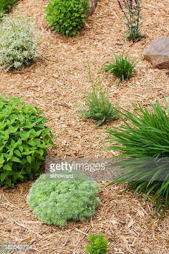 Wood chip mulch in perennial flower garden vertical stock for Perennial wood
