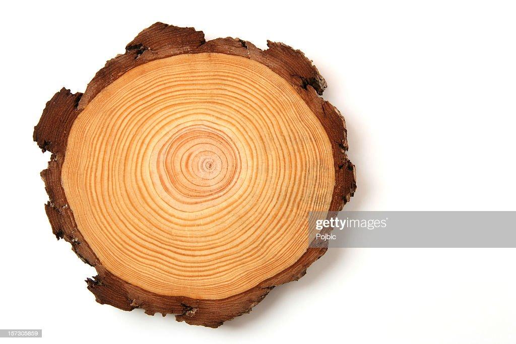 wood crossection : Stock Photo