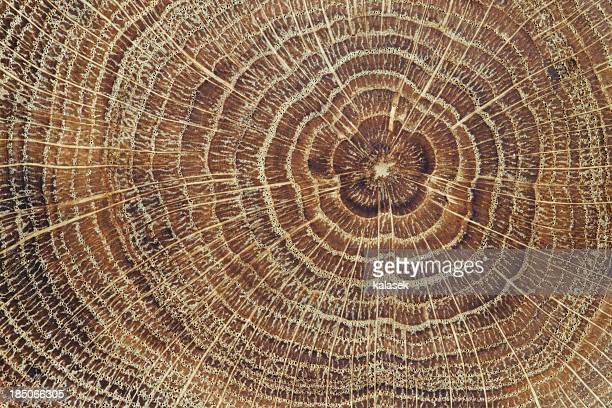 Wood cross-section background