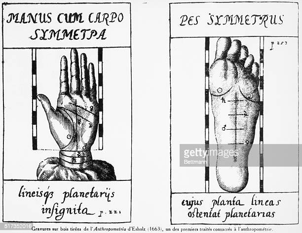 Wood engravings from Esholz's 'Antropometria' of 1663 depicting the relation of foot and hand measurements to the constellations BPA2