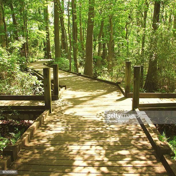Wood path,summer