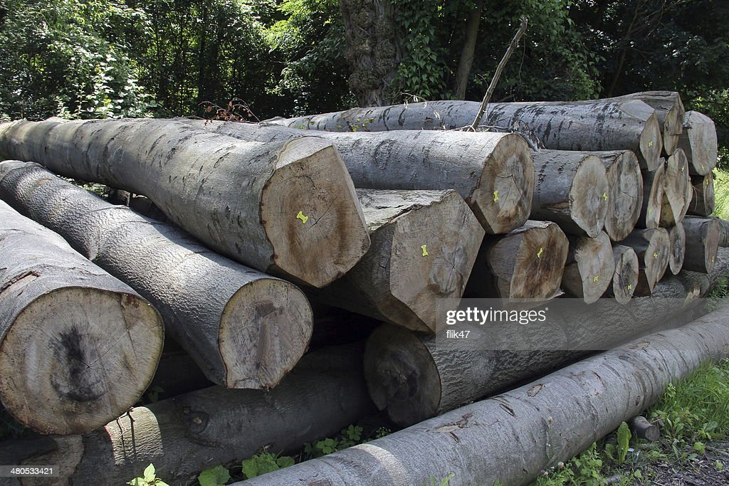 Wood preparation : Stock Photo