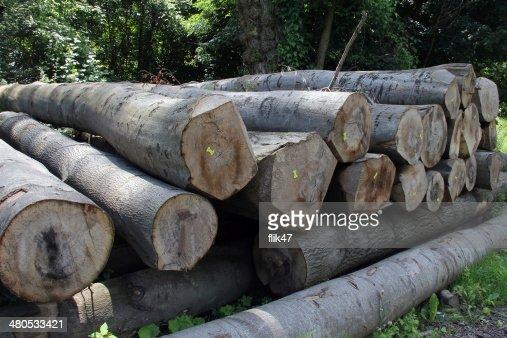 Wood preparation : Stock Photo
