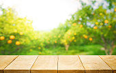 Wood table top with blur of orange garden farm in the morning.For montage product display or design key visual layout